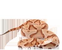 Snake-Removal